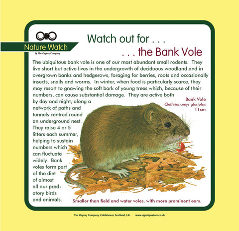 'Bank vole' Nature Watch Panel