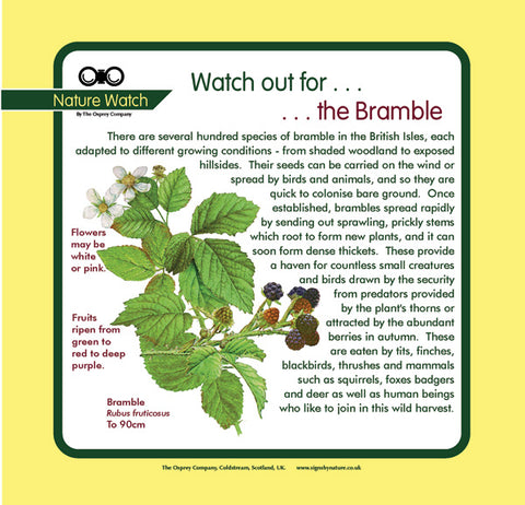 'Bramble' Nature Watch Panel