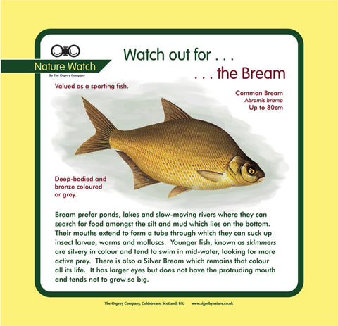 'Bream' Nature Watch Panel