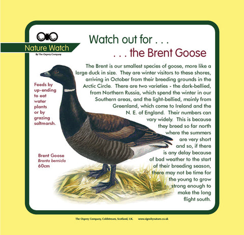 'Brent goose' Nature Watch Panel