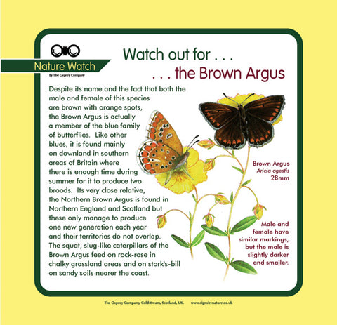 'Brown argus' Nature Watch Panel