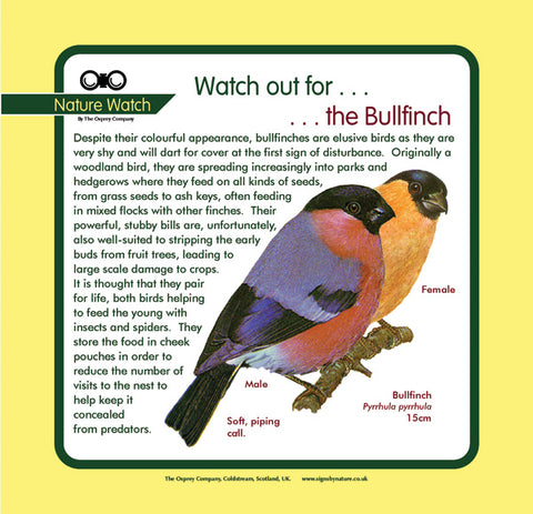 'Bullfinch' Nature Watch Panel