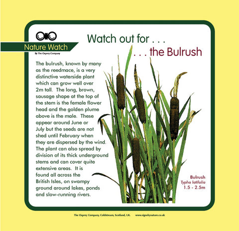 'Bulrush'' Nature Watch Panel
