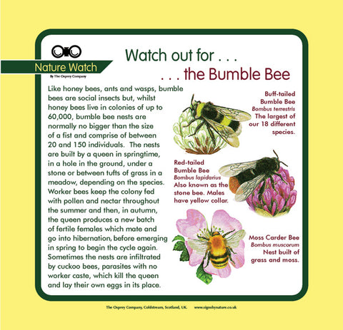 'Bumble bee' Nature Watch Panel