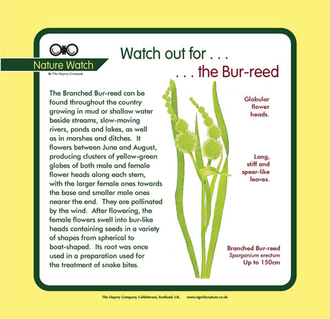 'Bur-reed' Nature Watch Panel