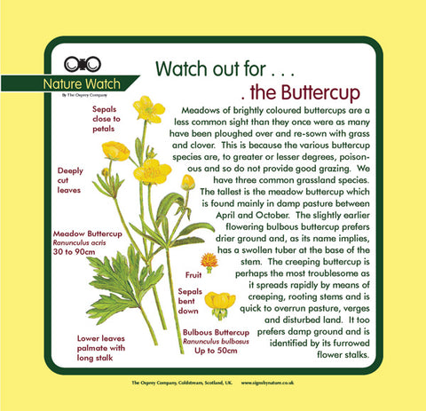 'Buttercup' Nature Watch Panel