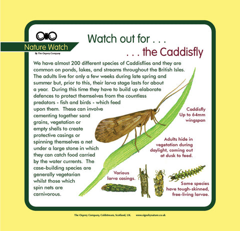 'Caddisfly' Nature Watch Panel