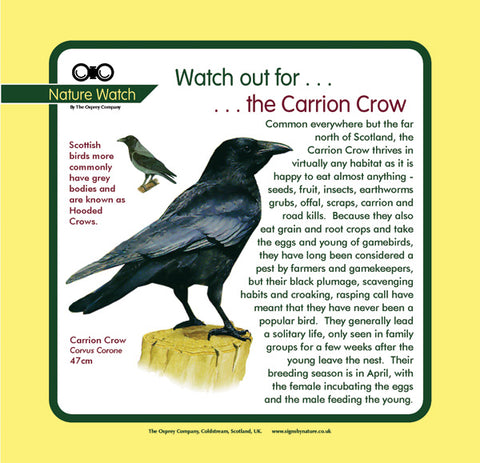 'Carrion crow' Nature Watch Panel