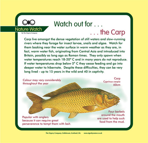 'Carp' Nature Watch Panel