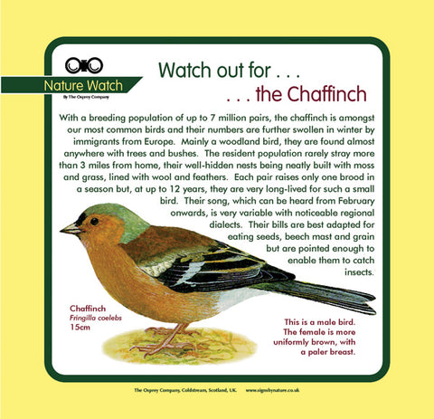 'Chaffinch' Nature Watch Panel