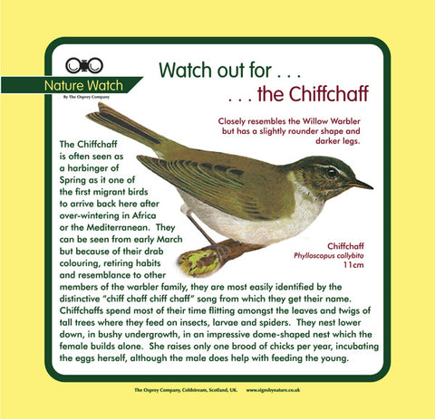 'Chiff chaff' Nature Watch Panel