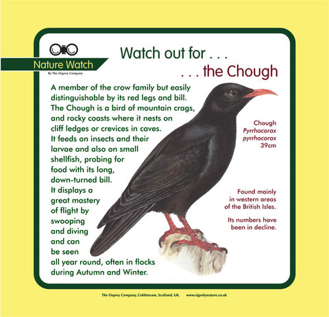 'Chough' Nature Watch Panel