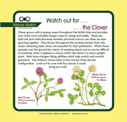 'Clover' Nature Watch Panel