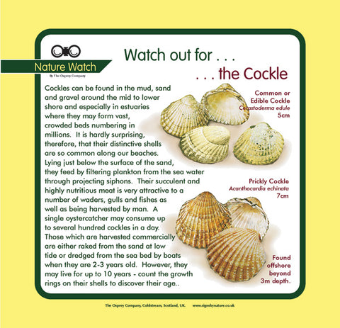 'Cockle' Nature Watch Panel