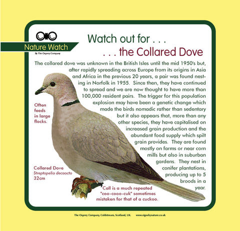 'Collared dove' Nature Watch Panel