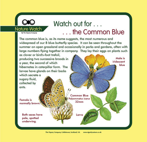 'Common blue' Nature Watch Panel