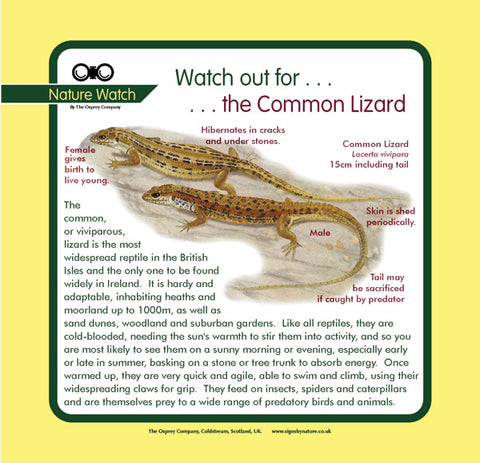 'Common lizard' Nature Watch Panel