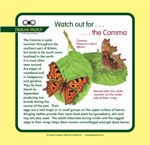 'Comma butterfly' Nature Watch Panel
