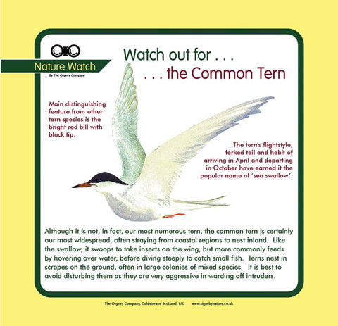 'Common tern' Nature Watch Panel