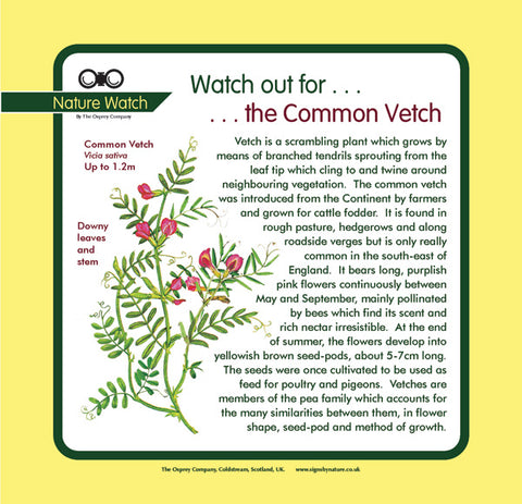 'Vetch' Nature Watch Panel