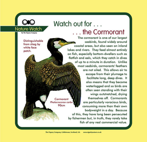'Cormorant' Nature Watch Panel