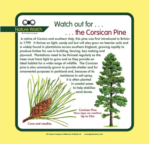 'Corsican pine' Nature Watch Panel
