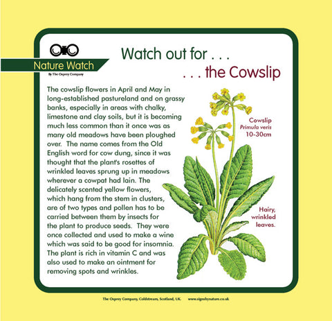 'Cowslip' Nature Watch Panel