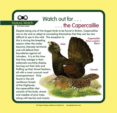 'Capercaillie' Nature Watch Panel