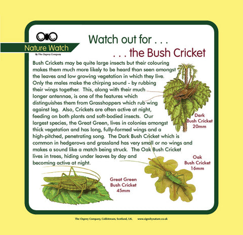 'Bush cricket' Nature Watch Panel