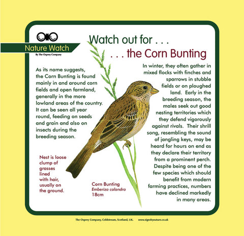 'Corn bunting' Nature Watch Panel