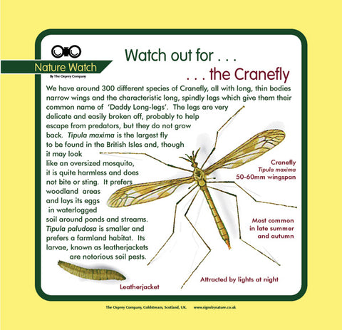 'Crane fly' Nature Watch Panel