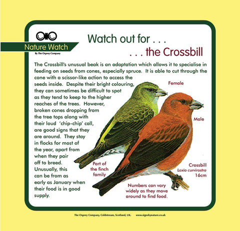 'Crossbill' Nature Watch Panel