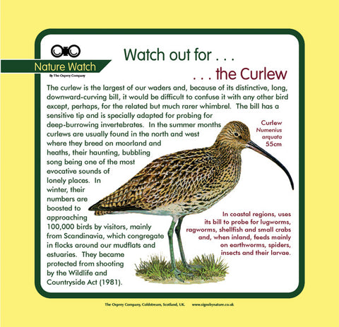 'Curlew' Nature Watch Panel