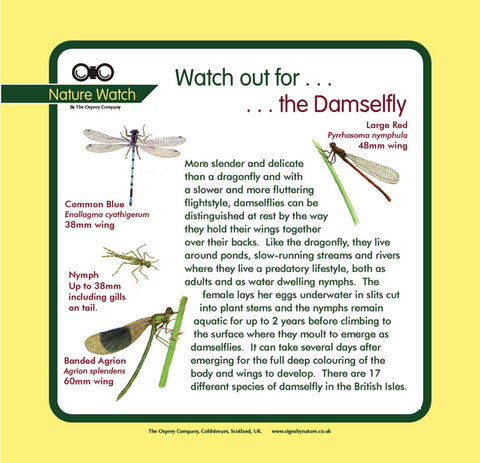 'Damselfly' Nature Watch Panel