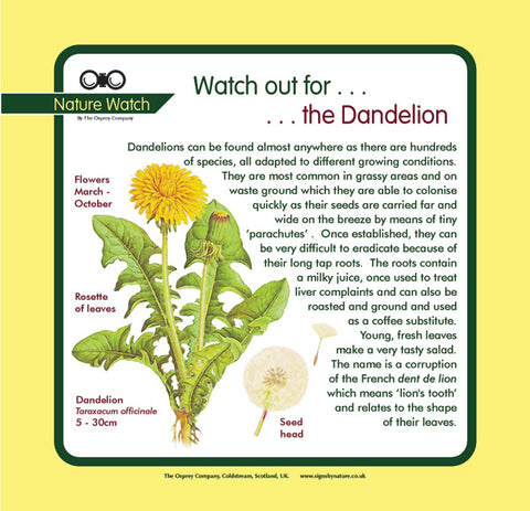 'Dandelion' Nature Watch Panel