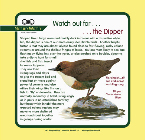 'Dipper' Nature Watch Panel