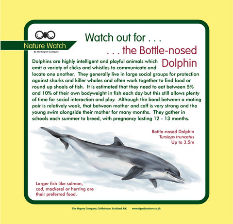 'Dolphin' Nature Watch Panel