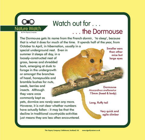 'Dormouse' Nature Watch Panel