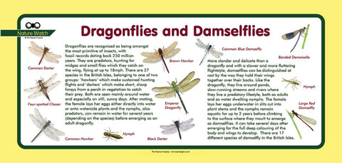 'Dragonflies & Damselflies' Nature Watch Plus Panel