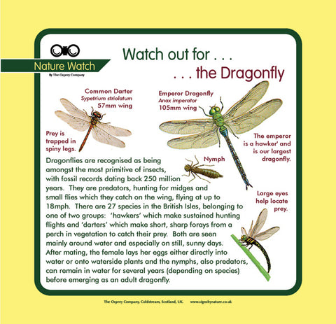 'Dragonfly' Nature Watch Panel