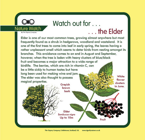 'Elder' Nature Watch Panel