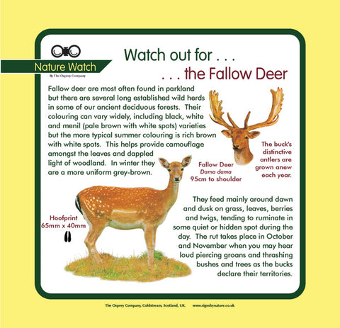 'Fallow deer' Nature Watch Panel