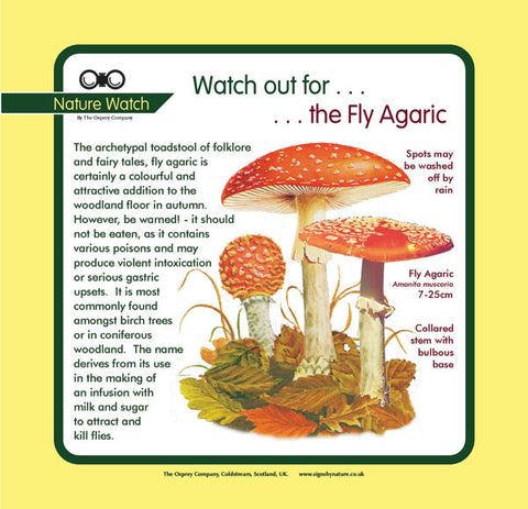 'Fly agaric' Nature Watch Panel