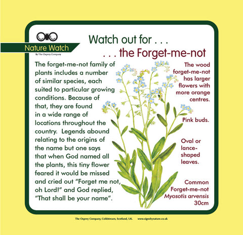 'Forget-me-not' Nature Watch Panel