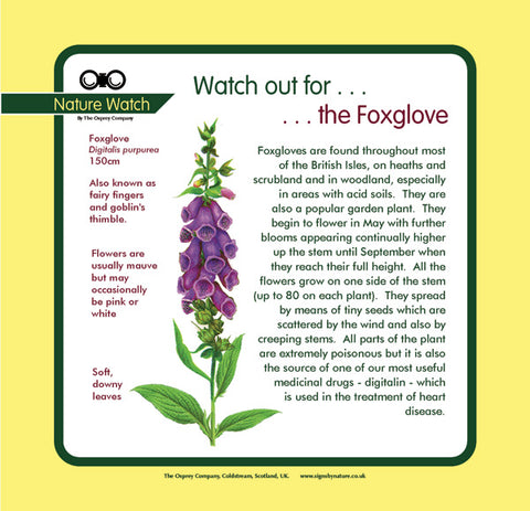 'Foxglove' Nature Watch Panel