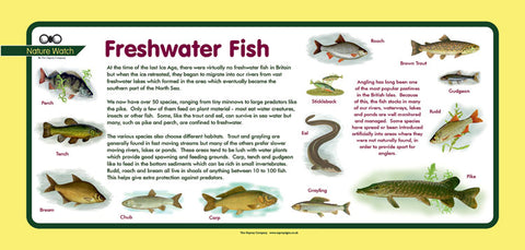 'Freshwater Fish' Nature Watch Plus Panel