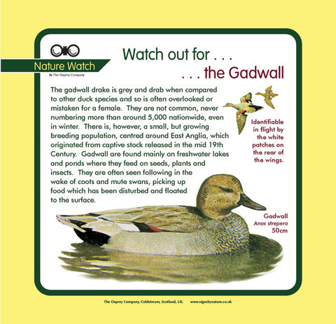 'Gadwall' Nature Watch Panel