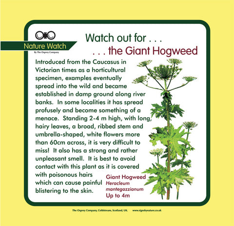 'Giant hogweed' Nature Watch Panel