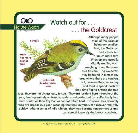 'Goldcrest' Nature Watch Panel