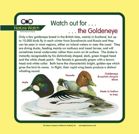 'Goldeneye' Nature Watch Panel
